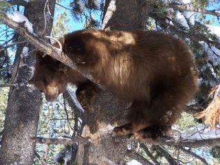 7-11 Bear1