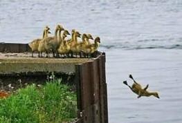 Duck_dive