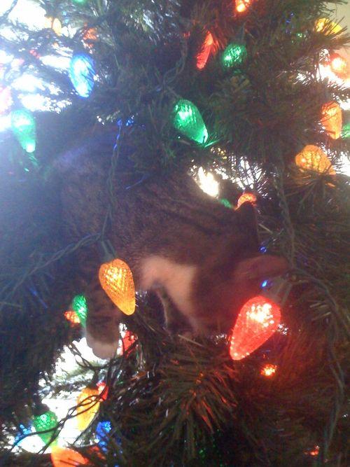 Tiggher in Tree