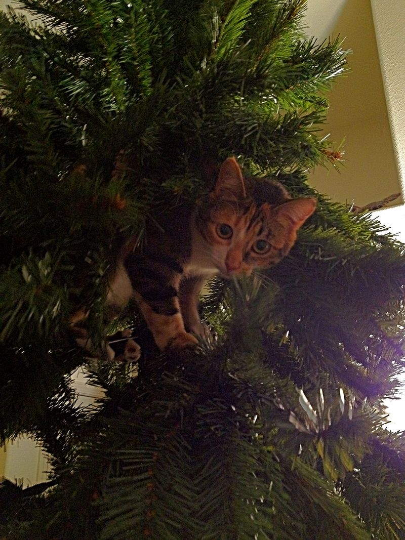 2011_December_Cats_Punky in Treeps