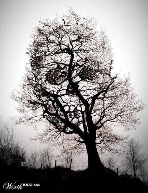 20-Skull in Trees