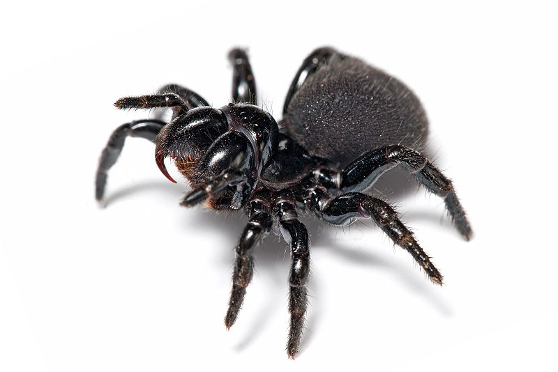 800pxmouse_spider